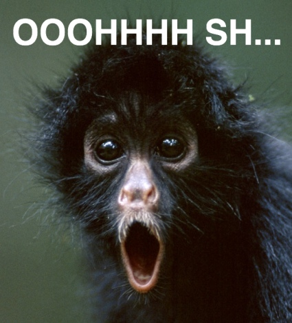 A spider monkey looks surprised